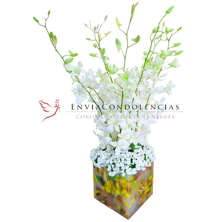 Orquídeas Luz de Esperanza
