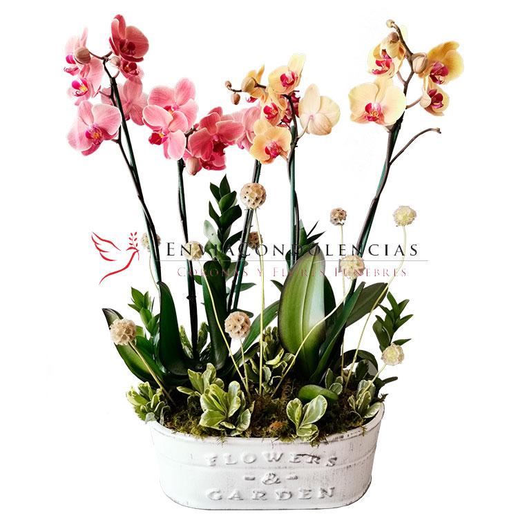 Orquídeas Recuerdos del Alma